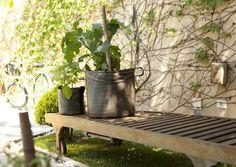 """Originária da Índia, a berinjela é uma hortaliça supersaudável e versátil, que substitui a proteína em vários pratos vegetarianos. A boa nova é que ela pode ser plantada em vaso, como ensina o engenheiro agrônomo, Marcelo Noronha, da """"Minha Horta"""", empresa especializada em oferecer aos moradores das grandes cidades a possibilidade de ter em casa hortas orgânicas. Além de nutritiva, a planta é muito charmosa e vai dar um toque especial em seu jardim"""