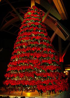 Poinsettia Tree Poinsettia Tree Christmas Poinsettia Christmas Time Martha Stewart Christmas Outdoor