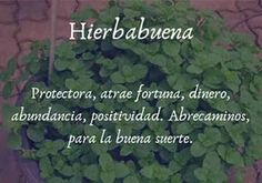 Magic Herbs, Feed Your Soul, Body Hacks, Kitchen Witch, Ayurveda, Tarot, Aromatherapy, Did You Know, Medicine