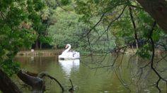 Lago no Parque da Redenção - Porto Alegre/RS Fotografado por mim.