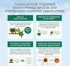 @ekofolio/Forestry on Twitter Carbon Sink, Sustainable Forestry, Environmental Education, Conservation, Habitats, Infographic, Twitter, Green, Climate Change