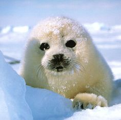 Cutest Animals That Will Make You Aww
