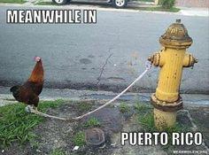 Puerto rican racist jokes