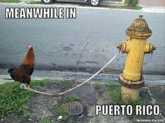 I'm Puerto Rican, so I can get away with this.