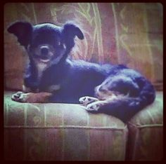 Is beatyful my dog true?
