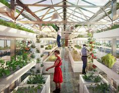 Aquaponics is a method of combined fish and vegetable farming that requires no soil. The farmer cultivates freshwater fish and plants in a recirculating water system that exchanges nutrients between the two, cutting freshwater use by 90 percent.