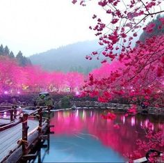 Japanese Garden #gardens, #Japan, #nature, https://apps.facebook.com/yangutu/