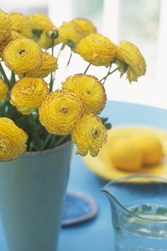 Caroline Arber Photography - Flowers