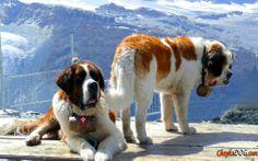 Rettungshunde Fotos