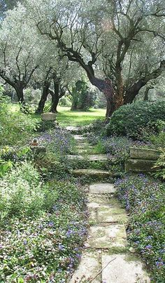 Walk in the Park?: Olive trees