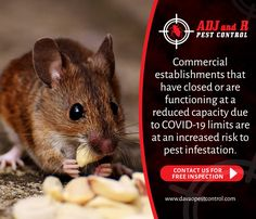 Best Pest Control, Davao, Rodents, Commercial, Activities, Website, Free