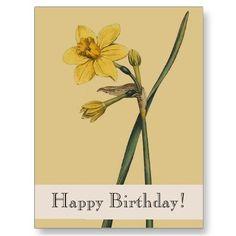 Vintage Botanical Daffodil Happy Birthday Postcard by farmer77