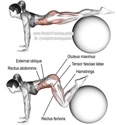 Stability ball jackknife. A compound leg and core exercise. Target muscles: Iliopsoas (not abs. Visit site to learn why). Synergistic muscles: Tensor Fasciae Latae, Sartorius, Pectineus, Adductor Longus, Adductor Brevis, Rectus Abdominis, Obliques, Adductor Magnus, and Gluteus Maximus. Dynamic stabilizers: Hamstrings and Rectus Femoris. Keep your neck neutral. Pull your knees all the way up to your chest.