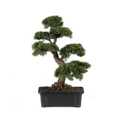 - Description - Specifications Add elegance and brighten up home or office with this detailed cedar bonsai plant presented in a rectangular shaped planter filled with artifical soil. A great long last