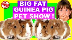 """PET SHOW FOR KIDS - Watch AkirahTubeHD as Akirah holds her very first pet show starring, her own super cute guinea pig. This """"pet show and tell"""" episode is especially for children speaking on their level."""