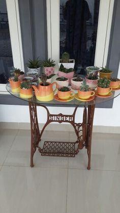 My kaktus