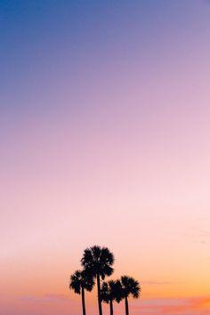 Palms by Hayden Scott - Photo 170068029 - 500px