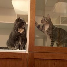 """Passing sweet love notes to my neighbor Lady Topaz.""  xoxo Yuengling  #HawaiisPremierLuxuryCatBoarding #Kittens #TheCatsMeowInn #Meow #instacat #Kailua #kittensofinstagram #cutecat #catsoninstagram  #Kitten #Cats_of_instagram #cat #kittenlove #catsagram #catlove #feline #Kitty #kitties #cat #catstagram #Selfiesunday #Hawaii #Honolulu #cats #catoftheday #catsofig #catlover #Catlovers #petsofinstagram #catsofinstagram #ilovemycat by thecatsmeowinn"