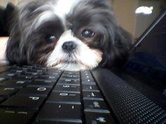 are you still on pinterest! My Bella who looks just like this pup does the same thing!
