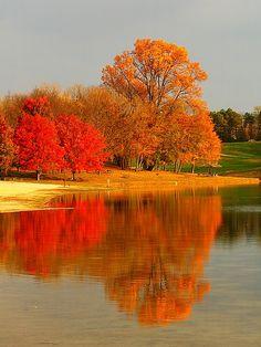 Autumn Trees Shade