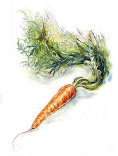 Carrot Study IV by Amy Holliday http://www.flickr.com/photos/amyholliday/5144284774/in/set-72157625212267028