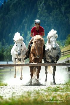 Wow! This is interesting! 3 horses jumping at once?