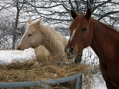 Tips for Managing Horses in Winter to Avoid Colic