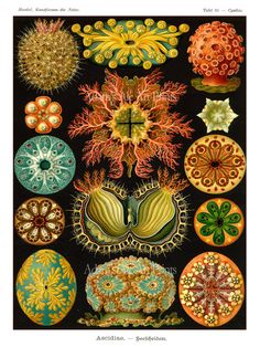Ernst Haeckel Art Nouveau Nautical Poster From Vintage Scientific Illustration - Vivid Sea Plants On Black Digital Art Print - Home Decor on Etsy, $7.00