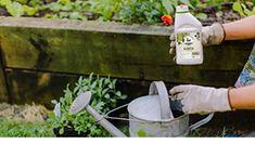 Top 10 Indoor Plants Hanging Baskets, Hanging Plants, Indoor Plants, Mother In Law Tongue, Swiss Cheese Plant, Fertilizer For Plants, Types Of Succulents, Outdoor Pots
