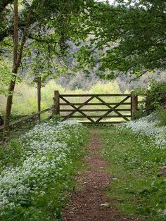 a path lined with wildflowers