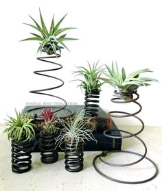 Tillandsia Air Plant Mini Recycled Coil Planters by DoodleBirdie: