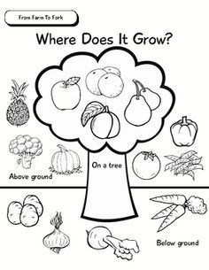 Students colour, cut and paste fruit and vegetable pictures on the Where Does It Grow? Worksheet to show whether different fruits and vegetables grow above ground, below ground or on a tree. Use this worksheet as a part of the following lesson:Objective: Understand that fruits and vegetables grow on trees, above ground and below ground.Activity 1: Read students the Big Book, Growing Vegetable Soup.