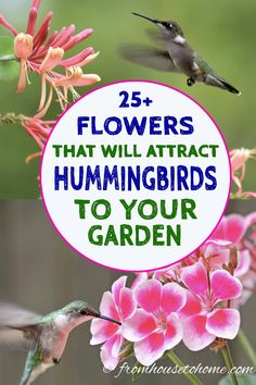 Hummingbird Plants: Of The Best Flowers That Attract Hummingbirds – Gardening @ From House To Home - Garden Types Hummingbird Flowers, Hummingbird Garden, Hummingbird Food, Hummingbird Nectar, Hummingbird Migration, Hummingbird Wallpaper, Hummingbird Painting, Hummingbird Tattoo, Garden Types