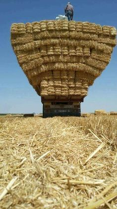 Gathering straw