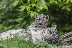 protecting mum by Daniel Münger on 500px