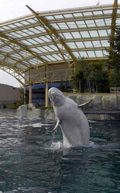 Mystic Aquarium - Mystic, CT (visited!)