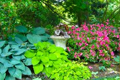 shade ideas for yards   Best Shade Plants for Landscaping Pictures Plans Ideas