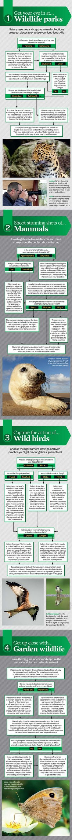 Wildlife photography in any environment: free photography cheat sheet