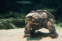 Turtles and dinosaurs: Scientists solve reptile mysteries with landmark study on the evolution of turtles