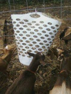 – Nigerian Dwarf Dairy Goats Hay is definitely Diy Hay Feeder, Goat Hay Feeder, Feeding Goats, Raising Goats, Mini Goats, Baby Goats, Diy Goat Toys, Goat Playground, Goat Shelter