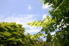 2013/5/3 嵐山