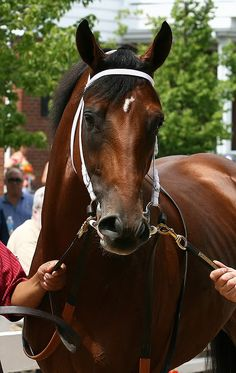 MONMOUTH PARK NJ   BIG BROWN in the paddock before his last race. My most favorite racehorse :)