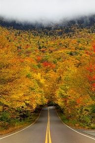 Autumn tree tunnel. Smuggler's Notch State Park, Vermont.