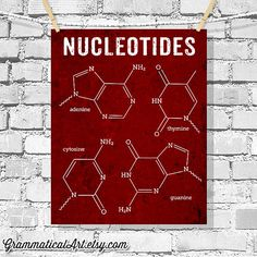 DNA Poster Nucleotides Science Art Biology by GrammaticalArt, $18.00