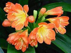 jake-pokojove-rostliny-kvetou-v-zime- Gardening, Plants, Gardens, Lawn And Garden, Plant, Planets, Horticulture