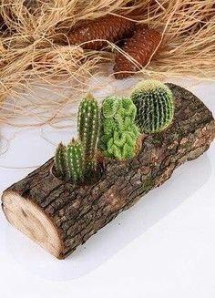 Succulentes et plantes grasses kaktus Cacti And Succulents, Planting Succulents, Cactus Plants, Succulent Containers, Cactus Decor, Plant Decor, Cactus Cactus, Garden Crafts, Garden Projects