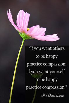 If You Want Others To Be Happy Practice Compassion If You Want Yourself To