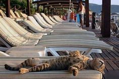 Here's a chilled out Bengal...LOVE Bengals!