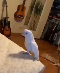 Me listening to the same song 15 times in a row - iFunny :) Funny Animal Jokes, Cute Funny Animals, Funny Animal Pictures, Animal Memes, Funny Cute, Funny Birds, Cute Birds, Fluffy Cows, Funny Parrots