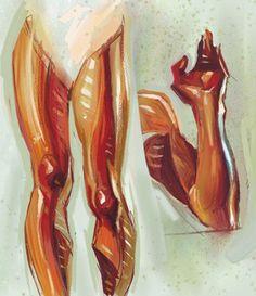 Muscle studies by J.C. Leyendecker